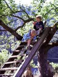 Kinder auf einem Baum