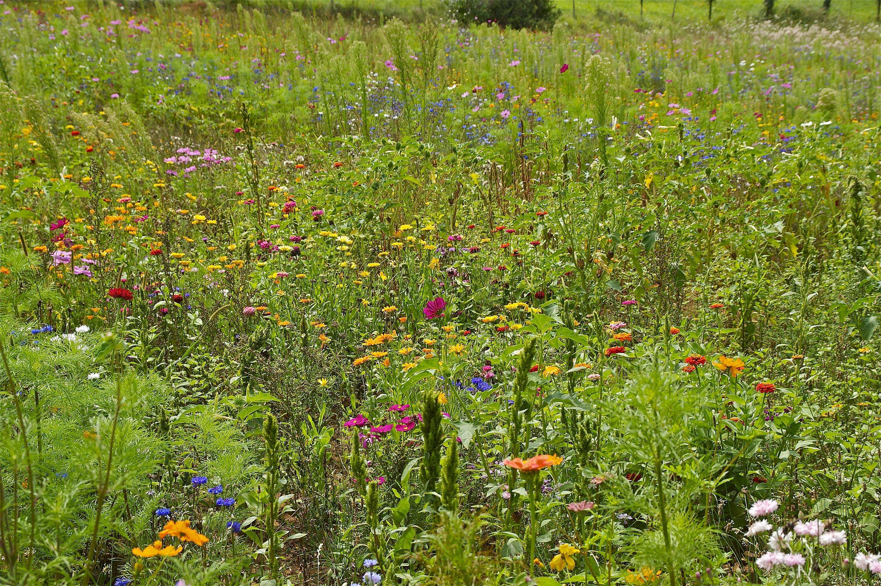 Tag der Artenvielfalt